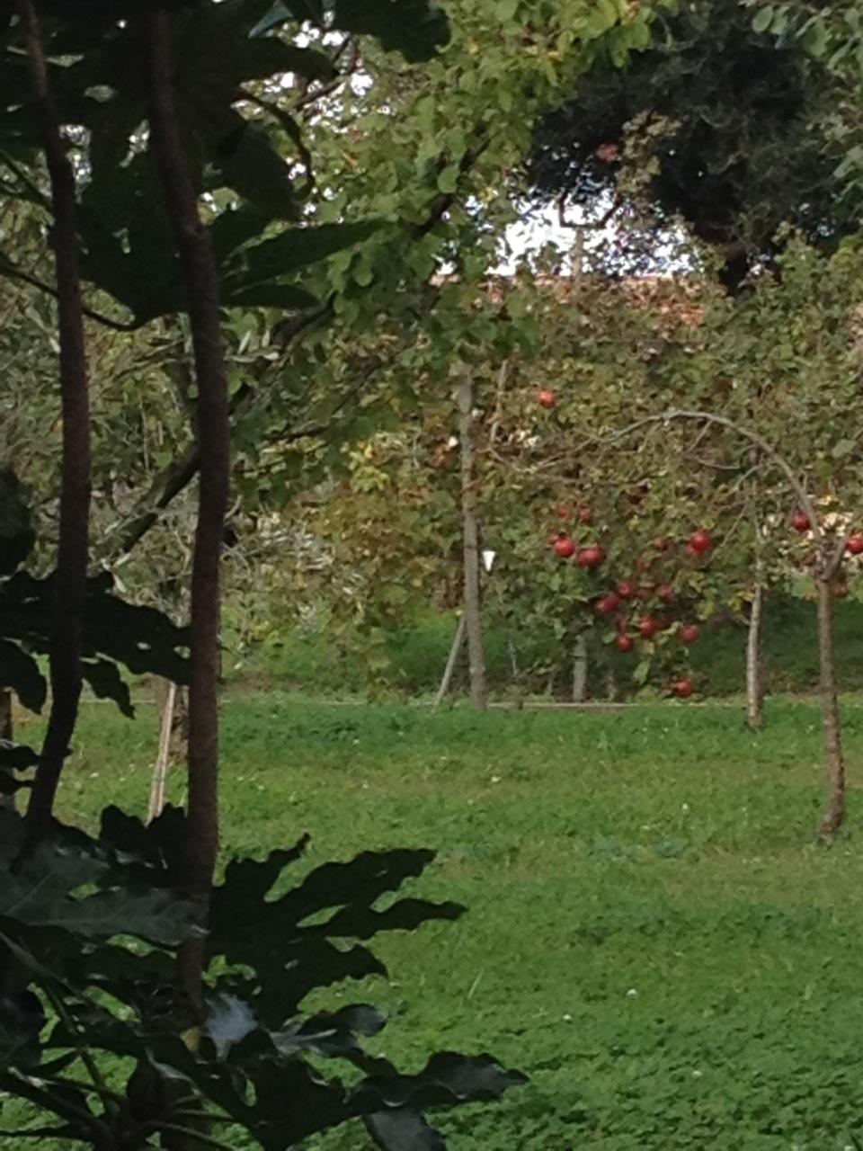 Scorcio dell'orto di San Francesco della Vigna, a Venezia, con albero da frutto