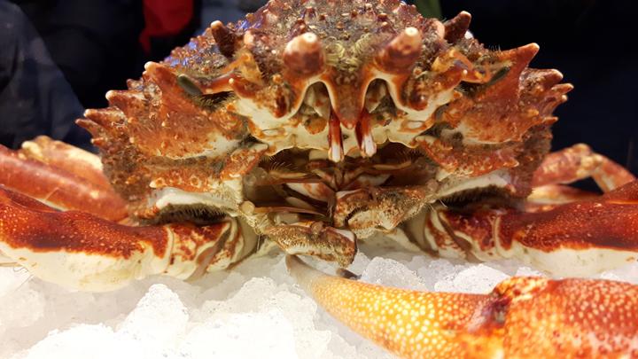 Venice, Rialto market, spider crab (Maya squinado)