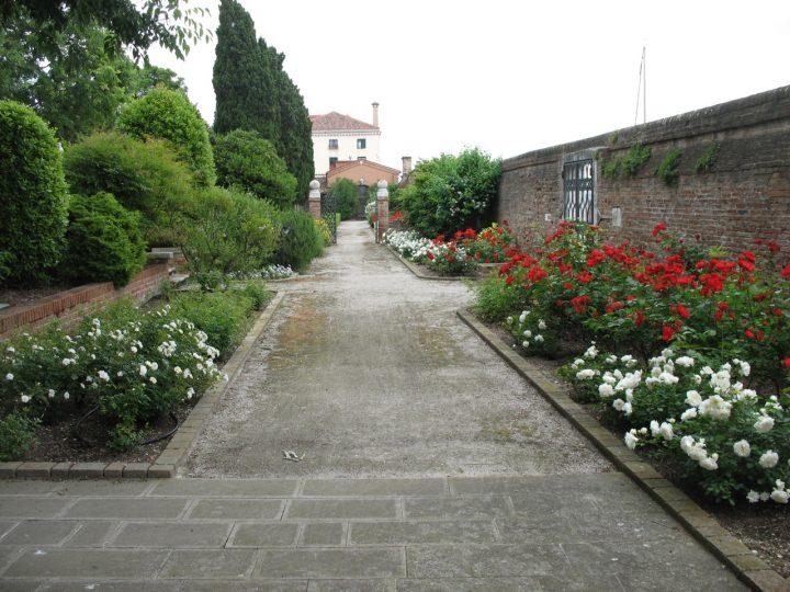 Rose rosse Sevillana e bianche Kosmos del giardino Contarini dal Zaffo a Venezia