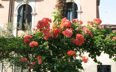 Gardens of Venice: the 'Palace Gardens'