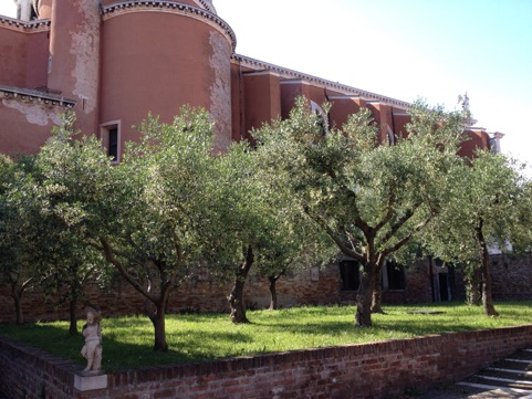 The small olive grove on the convent's grounds, alongside Santa Maria degli Angeli