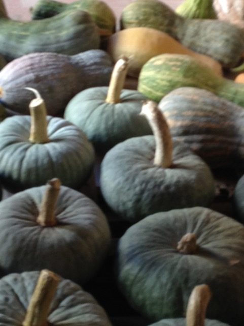 These pumpkins will soon be eaten by the monks or given to the poor