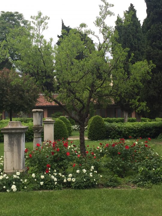 Photo 16: inner flowerbed bordered by roses with jujube tree