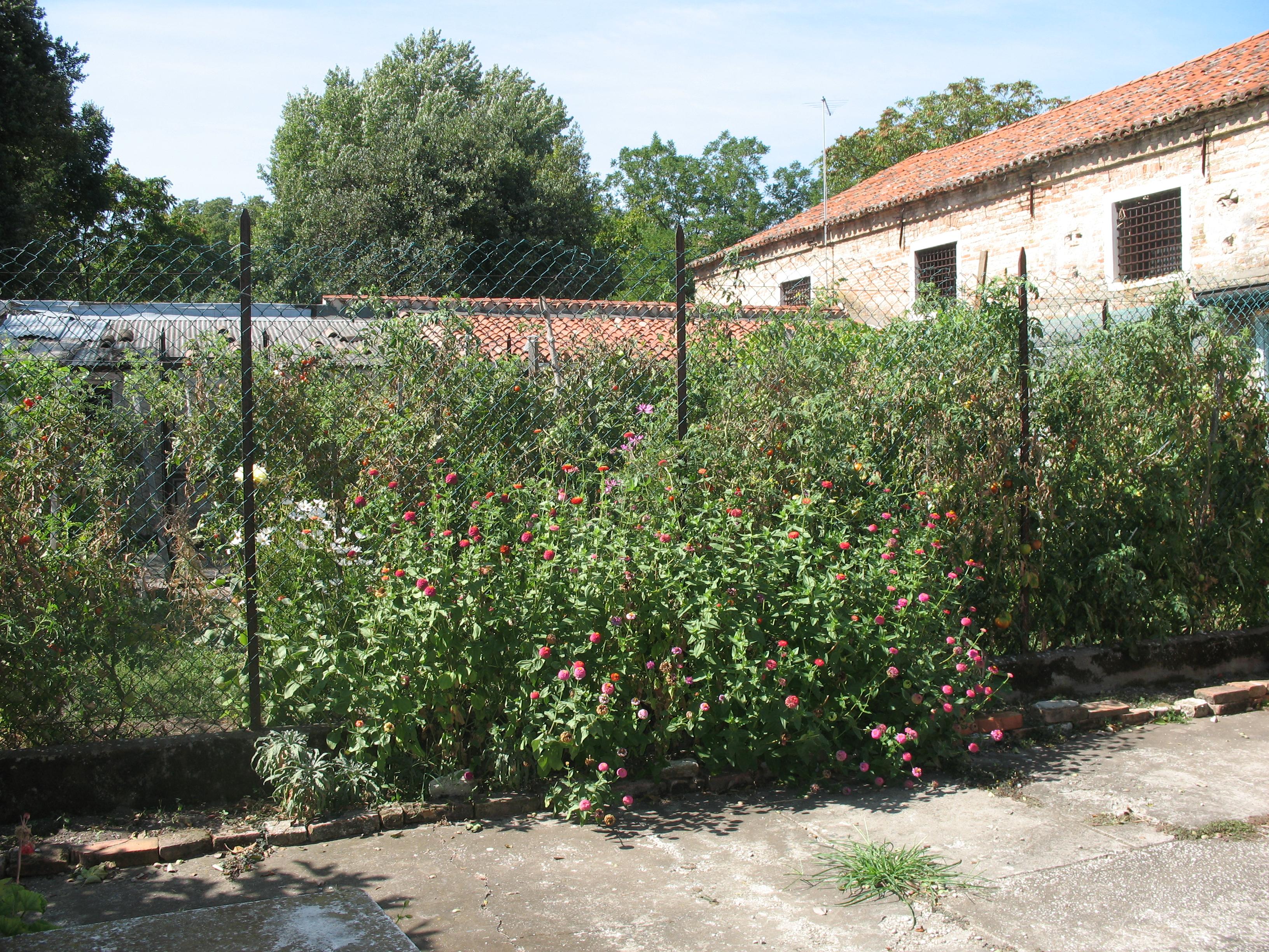 vue d'ensemble du petit jardin clôturé