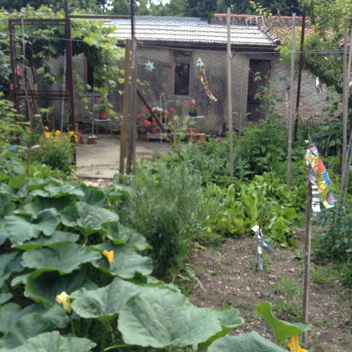 Photo 26: inner detail of the small vegetable plot