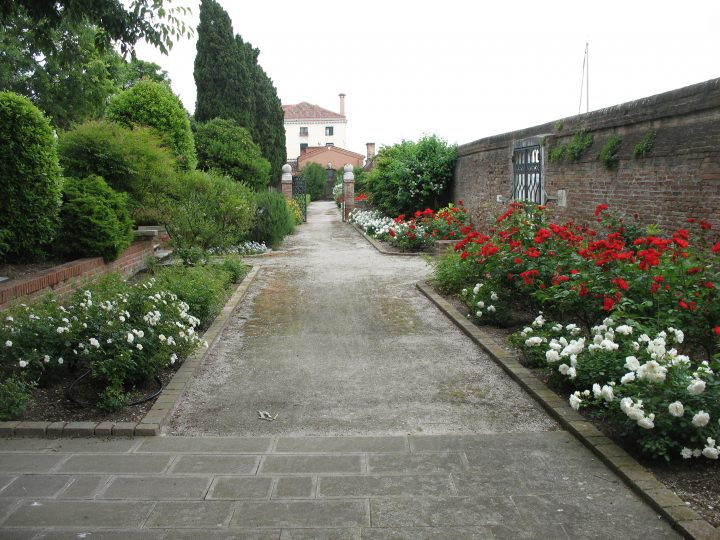 Photo 7: path with Kosmos and Sevillana roses on the right and Penelope roses on the left