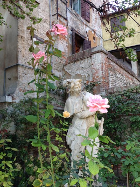 Venezia, Palazzo Malipiero Barnabò, la rosa Queen Elisabeth supera in altezza anche la statua della Primavera