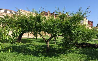Deuxième partie: Les Carmes Déchaux à Venise et leur jardin