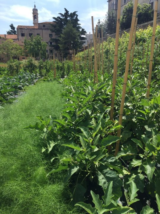Photo 19 another view of the vegetable garden