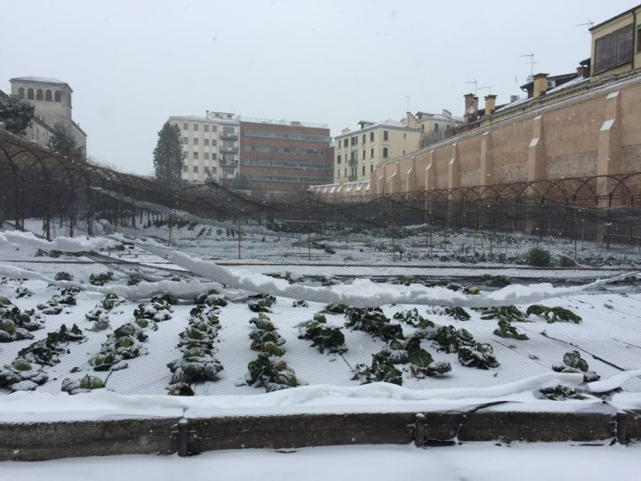 Photo 3 winter view of the garden; not all medicinal herbs grow in this period, so some sections are used as an extension of the vegetable garden