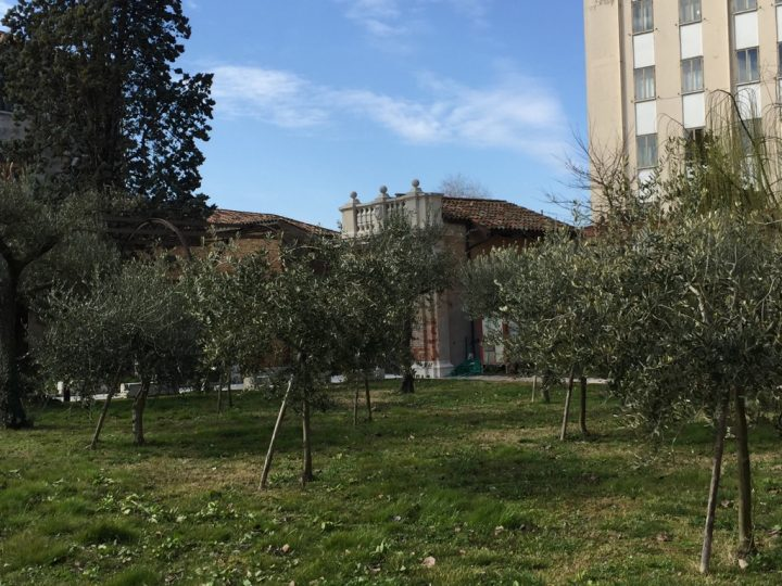 Photo 30 view of the olive grove; the Longhena temple can be seen in the background on the left