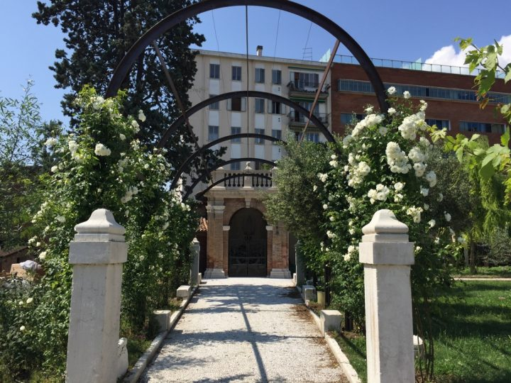 Photo 35 pergola with young Iceberg rose bushes. The pergola leads to the temple with the Madonna grotto