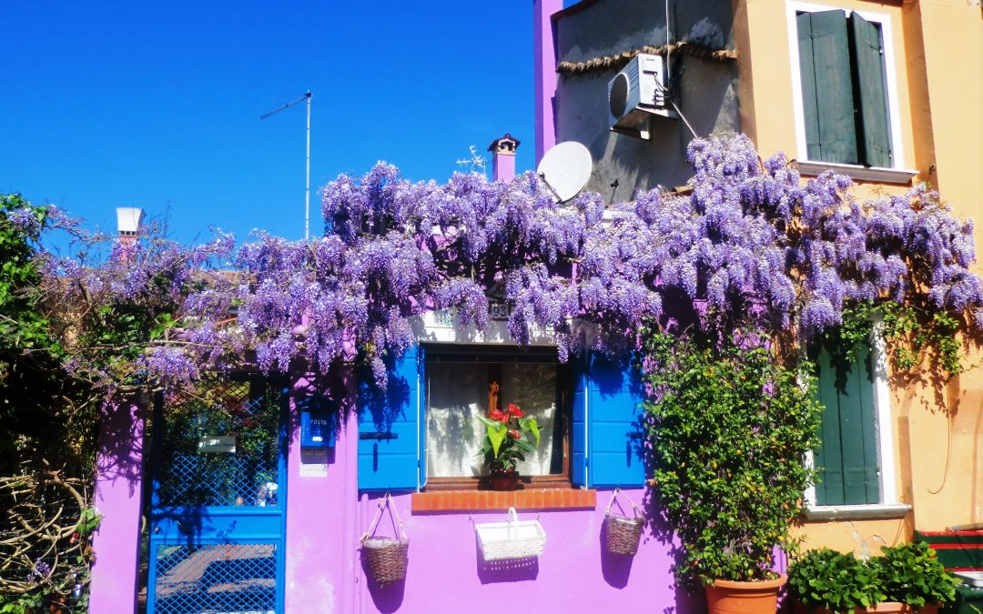 House with blossoming wisteria