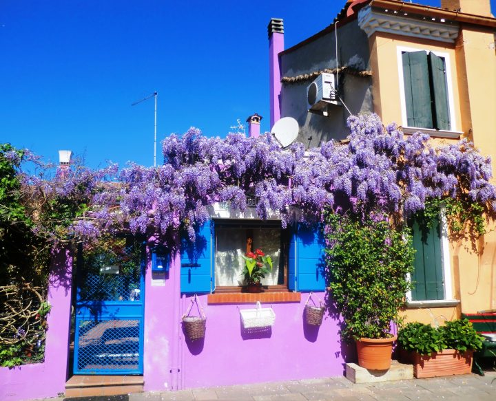 my favourite house with blossoming wisteria